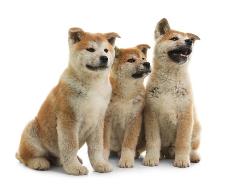 日本で飼育されている犬の平均寿命
