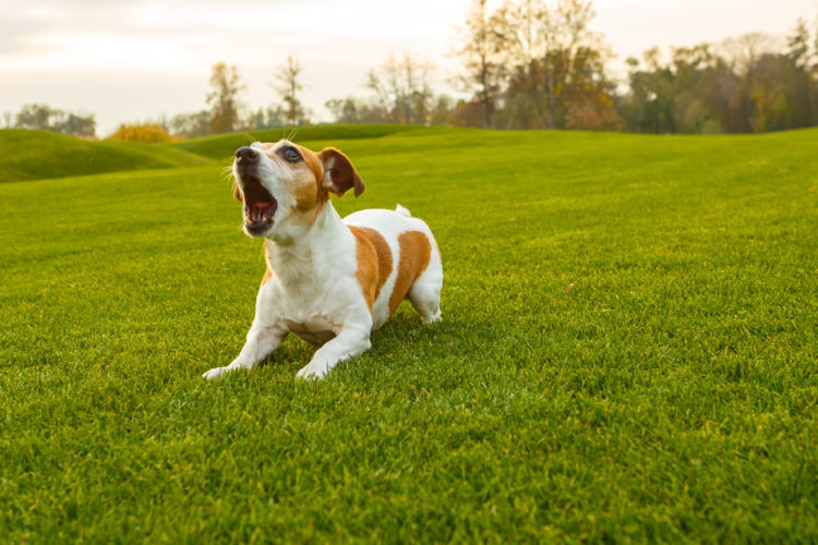 心配になる犬の鳴き声!急な悲鳴や悲しそうな声の「意味」とは?