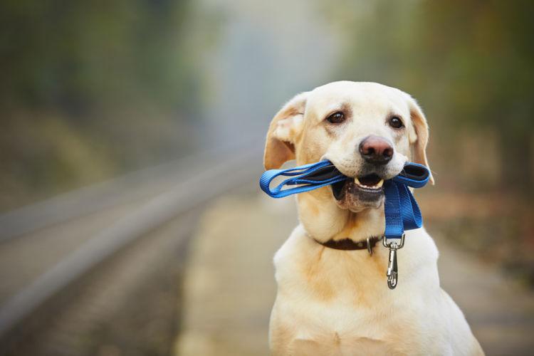 犬のリードは付けないとダメ?リードの役割と選び方