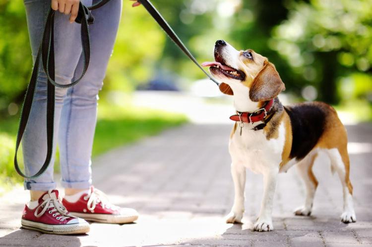 犬のリードの役割と選び方