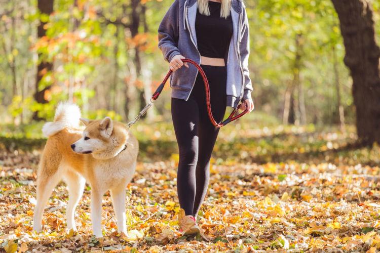 【秋田犬】の散歩は毎日必要?