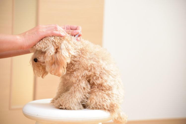 犬のフィラリアの検査と診断方法