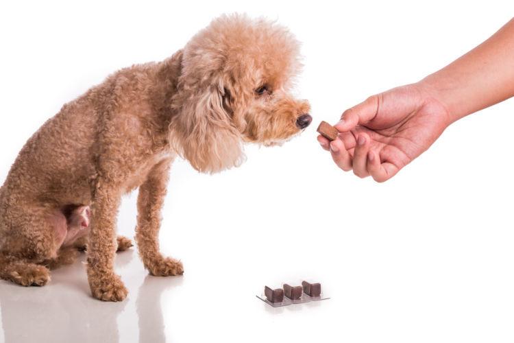 犬のフィラリアの予防方法!