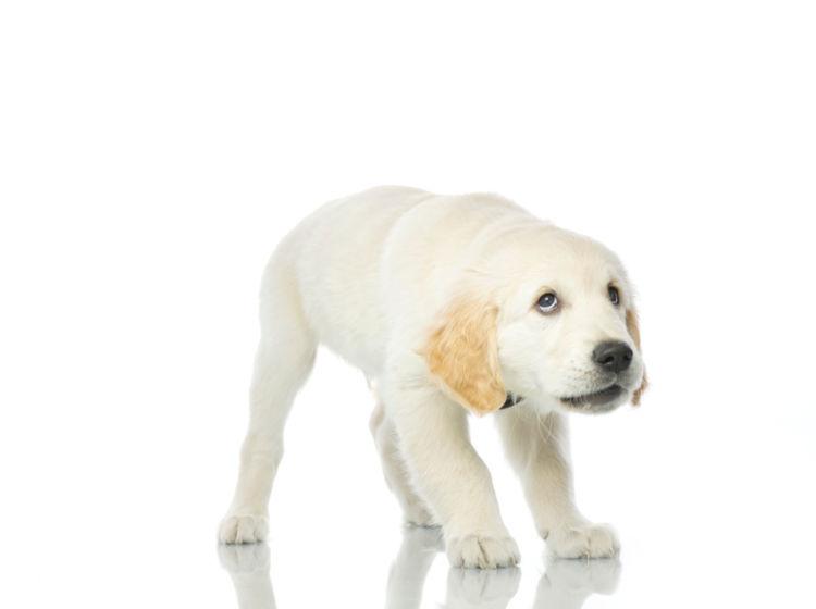 犬の警戒吠え【理由】