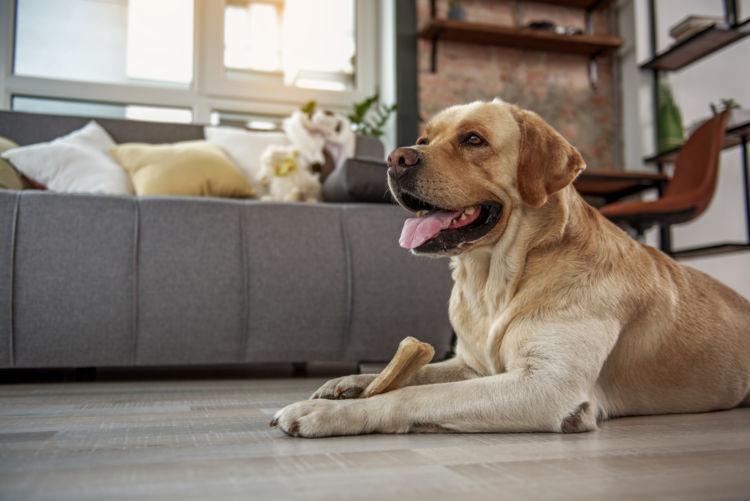 犬の警戒吠え【対策・練習方法】