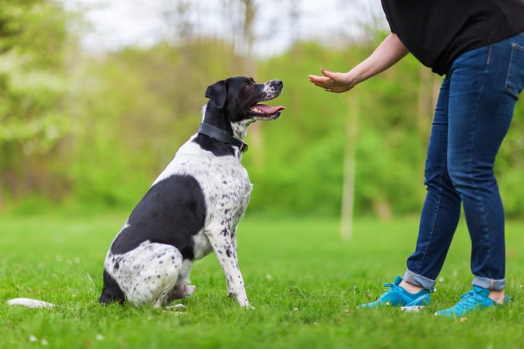 犬の警戒吠え【まとめ】