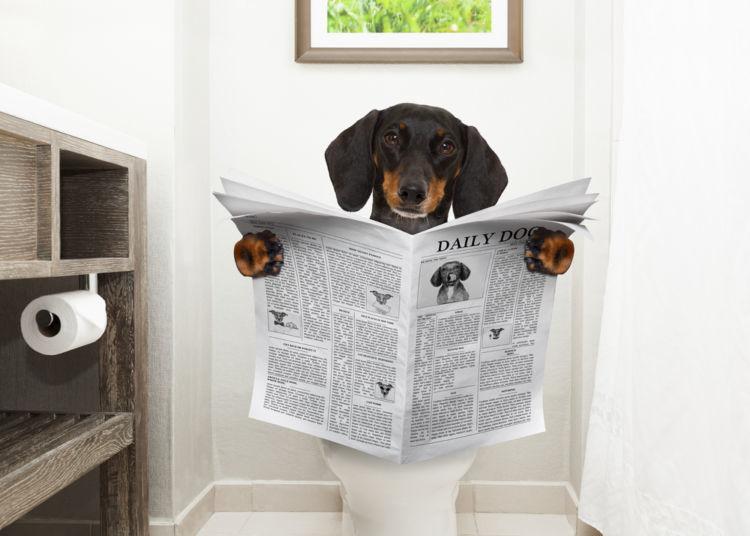 【ドッグトレーナー監修】成犬になってからのトイレのしつけ直しのやり方!