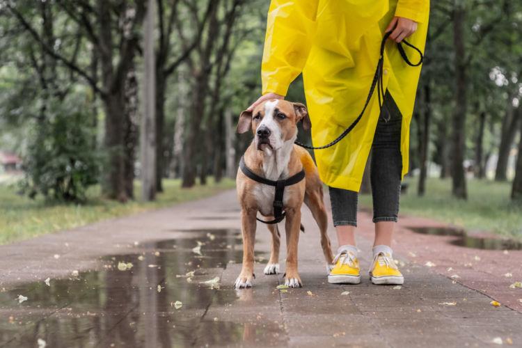 成犬のトイレ【散歩時の注意点】