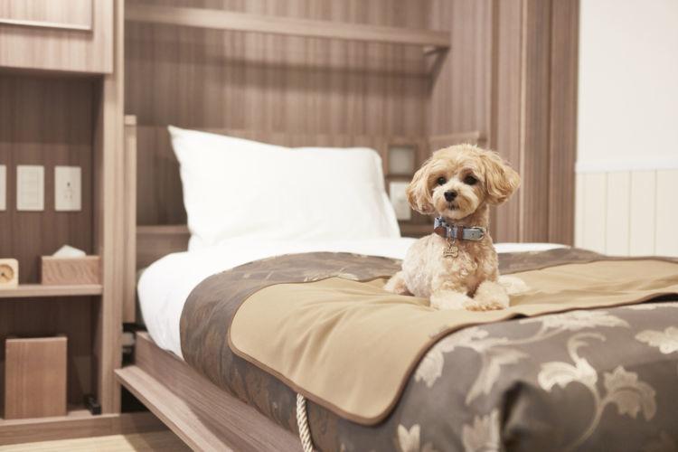 楽しみ方その1:愛犬とお部屋でまったり