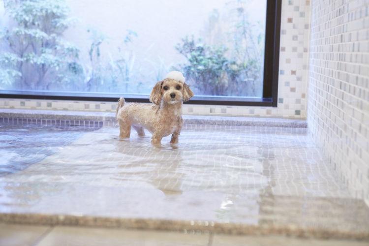 楽しみ方その4:愛犬もお風呂でさっぱり!