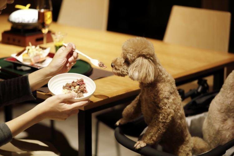 美しい会席料理に心満たされるディナータイム