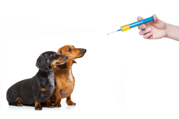 ワクチン接種で予防を