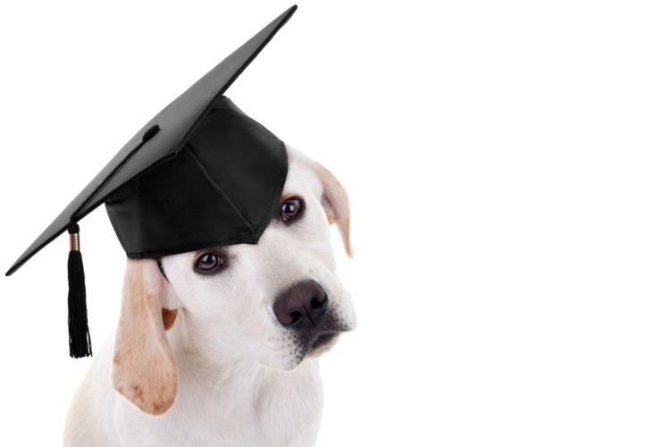 【ドッグトレーナー監修】子犬のしつけは「いつから」「どのような」順番でやればいい?