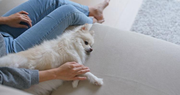 子犬のしつけの順番④【体を触られることに慣れる】
