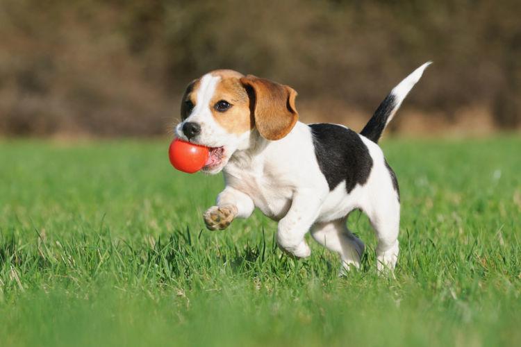 子犬のしつけの順番⑥【遊び】