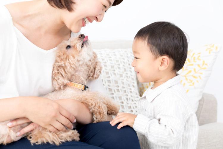 【獣医師監修】トイ・プードルの性格や種類、平均寿命は?飼い方、注意する病気、価格は?