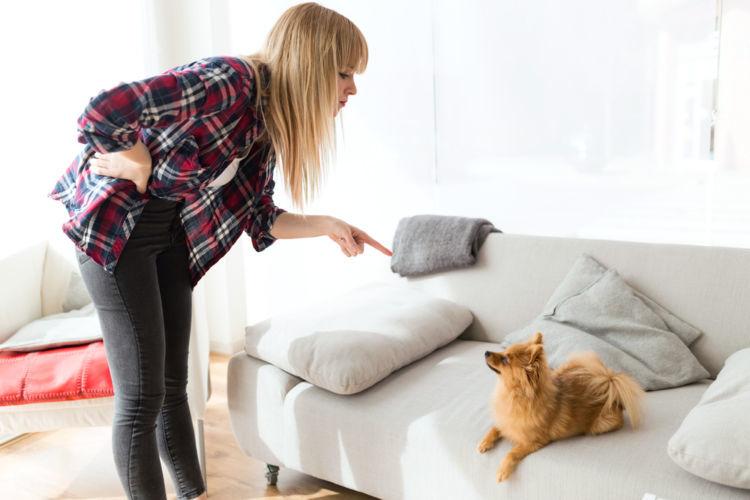【ドッグトレーナー監修】犬のしつけは、「怒る」から「叱る」へのシフトでうまくいく!