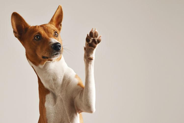 犬のしつけ「怒る」ではなく「叱る」
