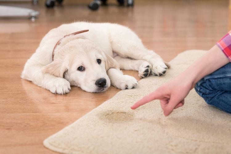 犬のしつけは「褒めること」が大事!