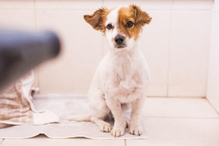 子犬のトイレのしつけ【失敗した時の対処方法】