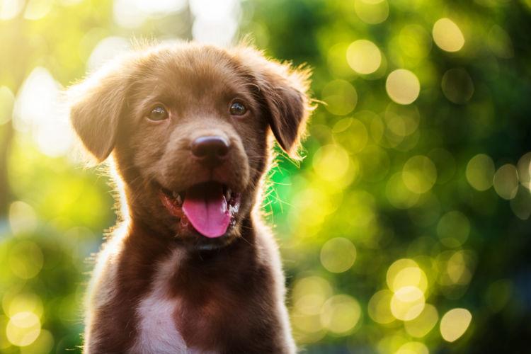 【ドッグトレーナー監修】子犬のしつけはいつから始める?