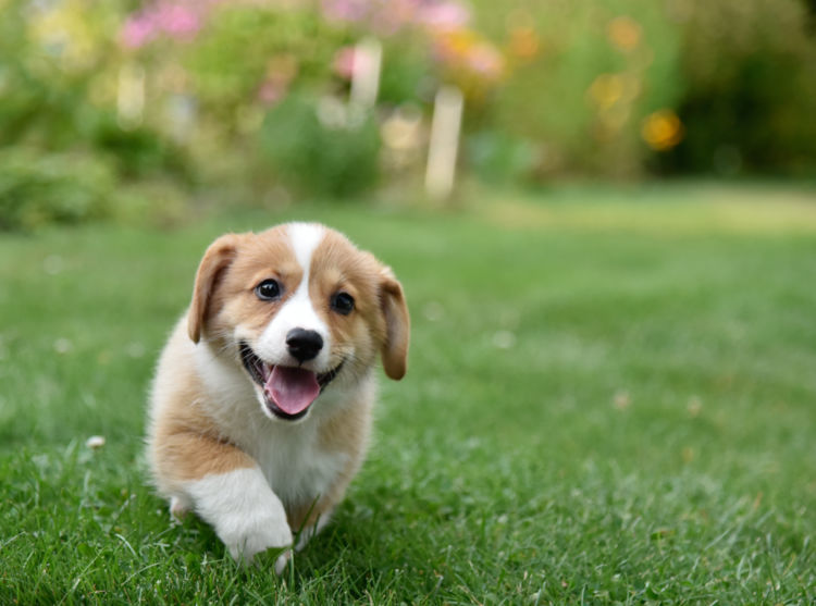 子犬のしつけ時期【社会化期】