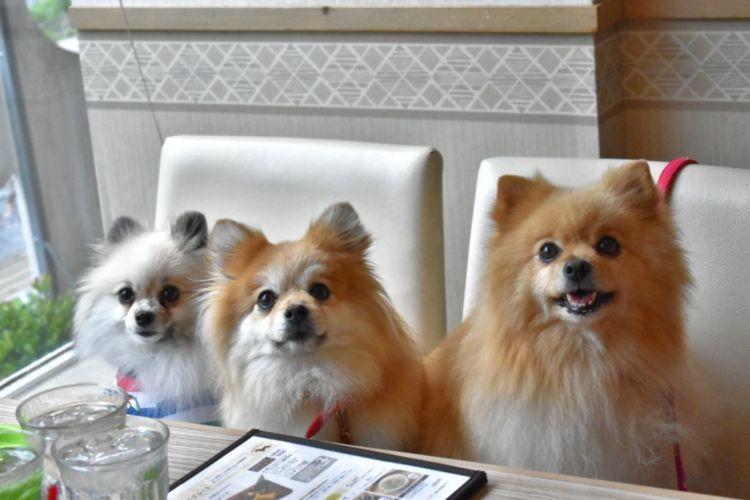 全席愛犬OK!愛犬と一緒にテーブルで焼き肉を堪能