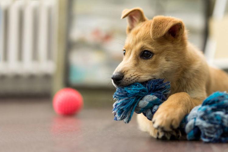 【ドッグトレーナー監修】子犬の甘噛みが治らない…原因や理由、対処方法は?