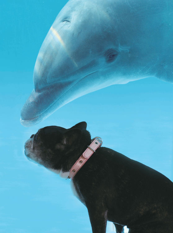 愛犬が大好きなイルカ「ジャンボ」に、こんにちは!