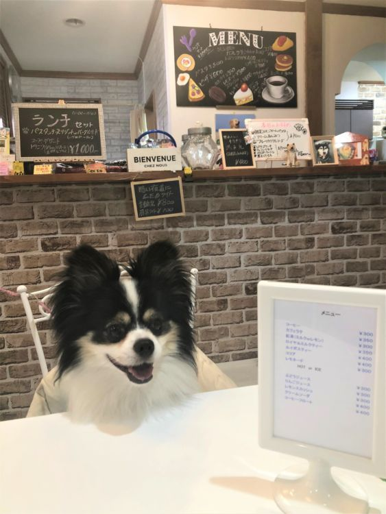 愛犬と利用できるカフェも併設。保護犬団体イベントの開催も