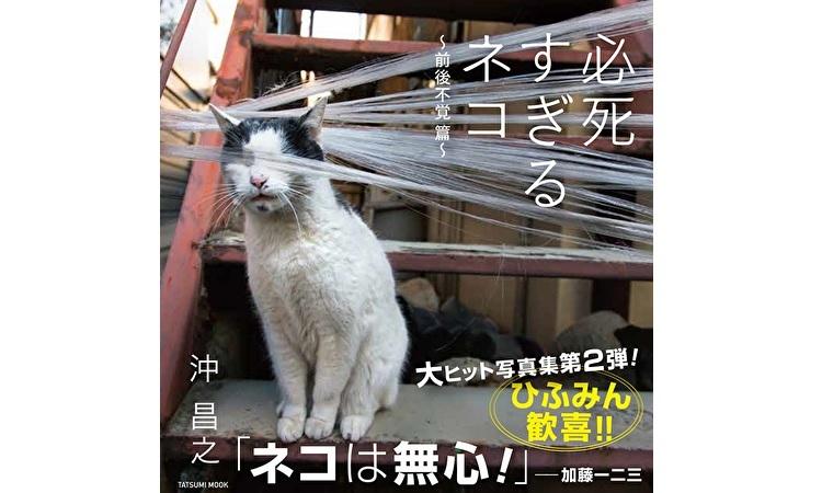 一生懸命な猫たちの姿に虜になる人続出!沖昌之写真集「必死すぎるネコ~前後不覚 篇~」