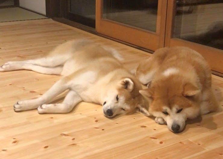 秋田犬とふれあいながら、古き良き日本の暮らしを楽しむ
