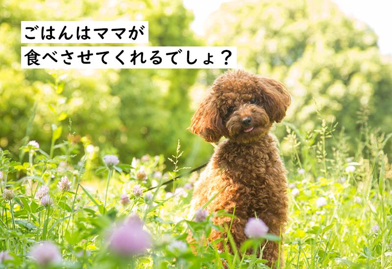 愛犬の食いつきや健康で悩むのはPECOのスタッフも一緒です! そんな時に出会ったフードをご紹介!