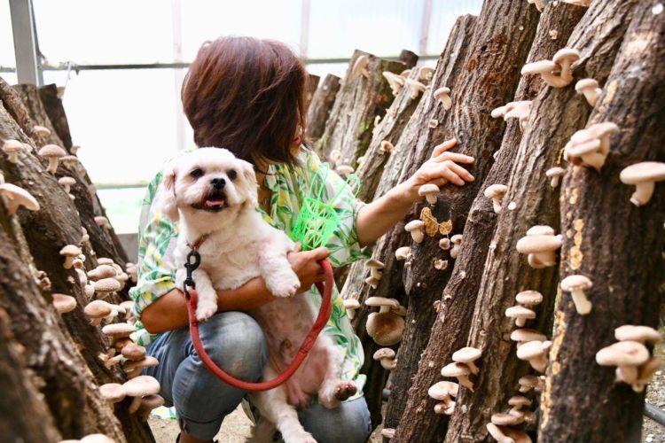 """【兵庫】 愛犬と一緒に椎茸狩り&バーベキューを楽しむ里山の休日 """"仲しい茸園"""""""