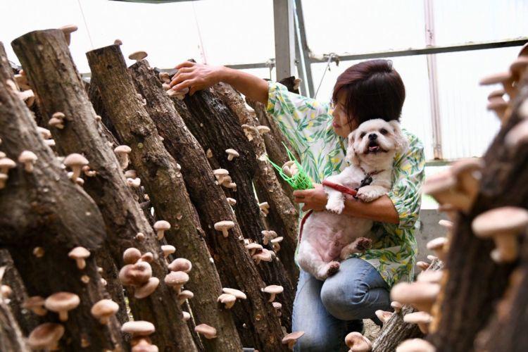まずは、椎茸狩りへ~上質な原木椎茸をカゴいっぱいに!