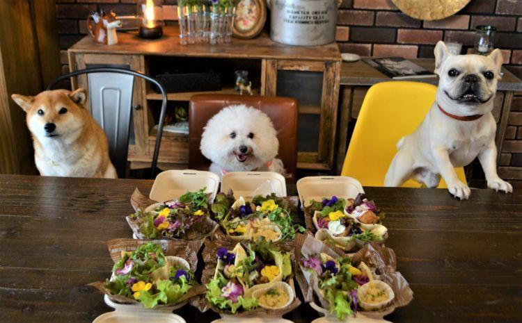 """【東京】愛犬参加OK!美味しくて可愛い手作りごはんが学べる大人気料理教室 """"Wanbino"""""""