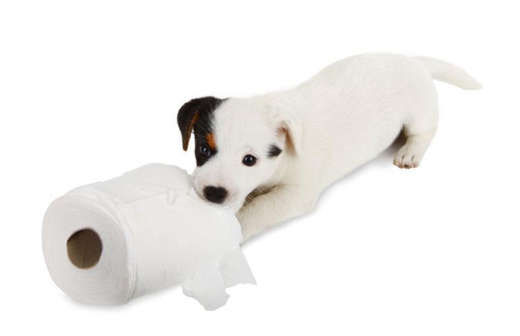 雨の日に室内でトイレができれば犬も快適