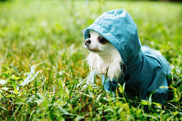 雨天の散歩で役立つグッズ