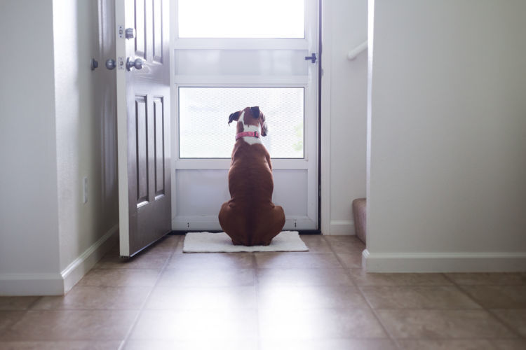 台風時の犬の散歩はどうする?