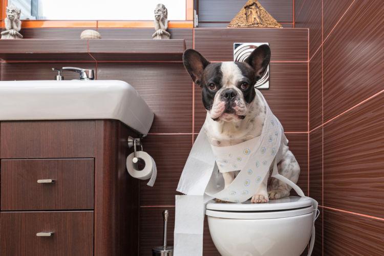 台風時の犬のトイレ問題
