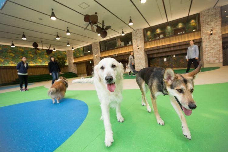 """【横浜】 愛犬とお出かけ。日本最大級の犬と人のための大型複合施設 """"WANCOTT(ワンコット)"""""""