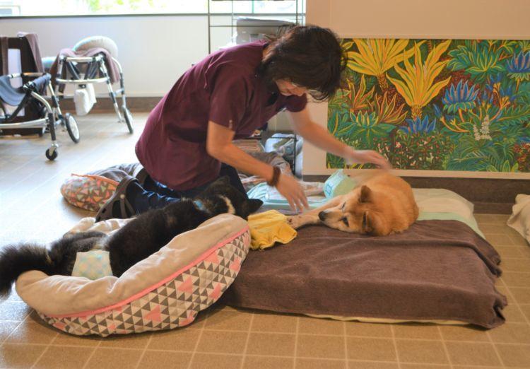 シニア犬に寄り添う誠実で優しい介護・老犬ケア