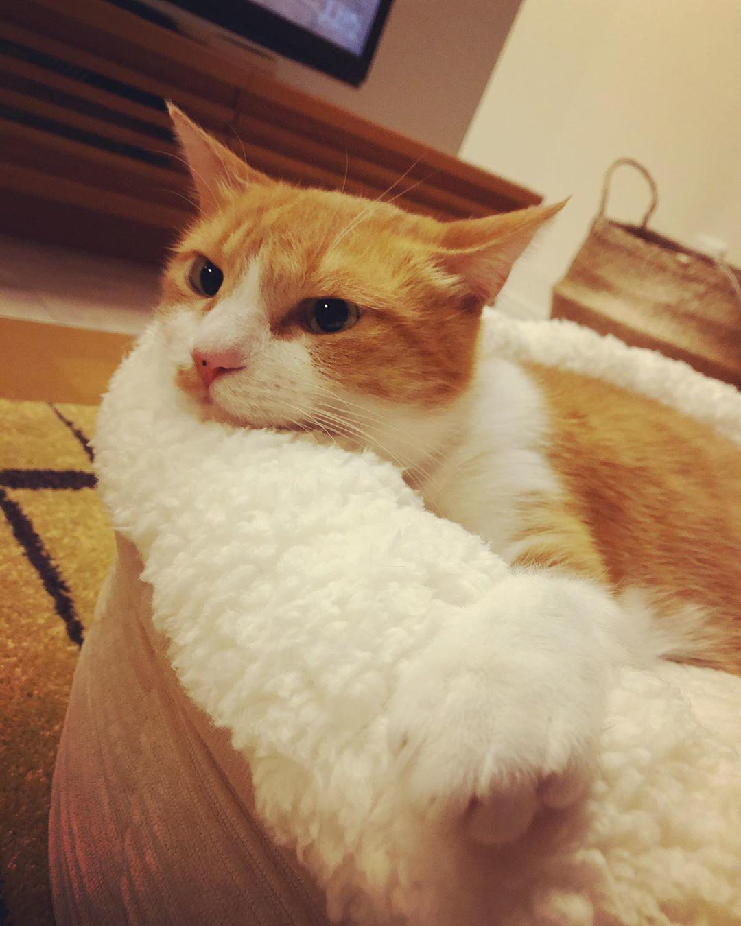 @mikosan_0212さん