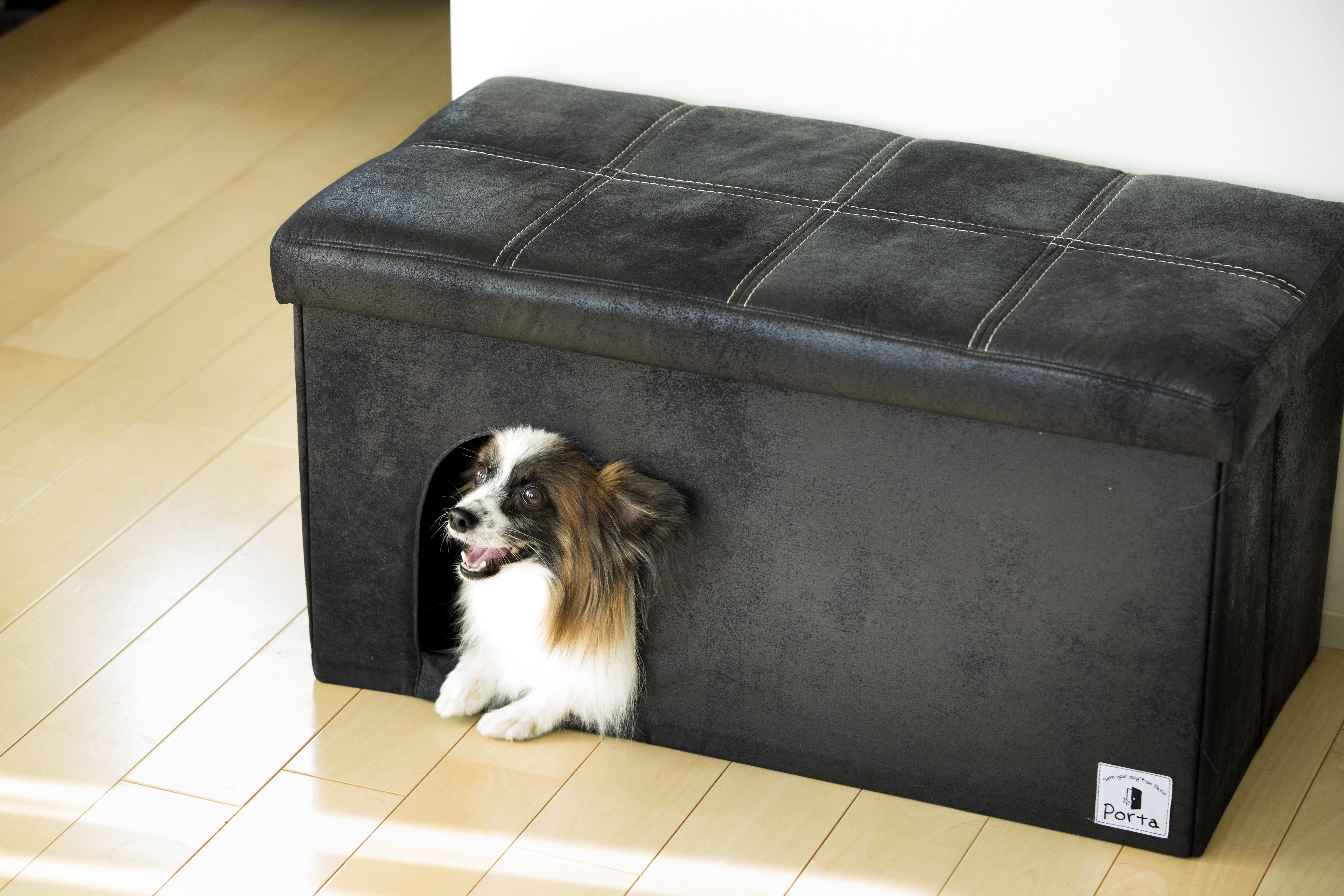 ソラくん:人もソファとして座れる犬家具の中