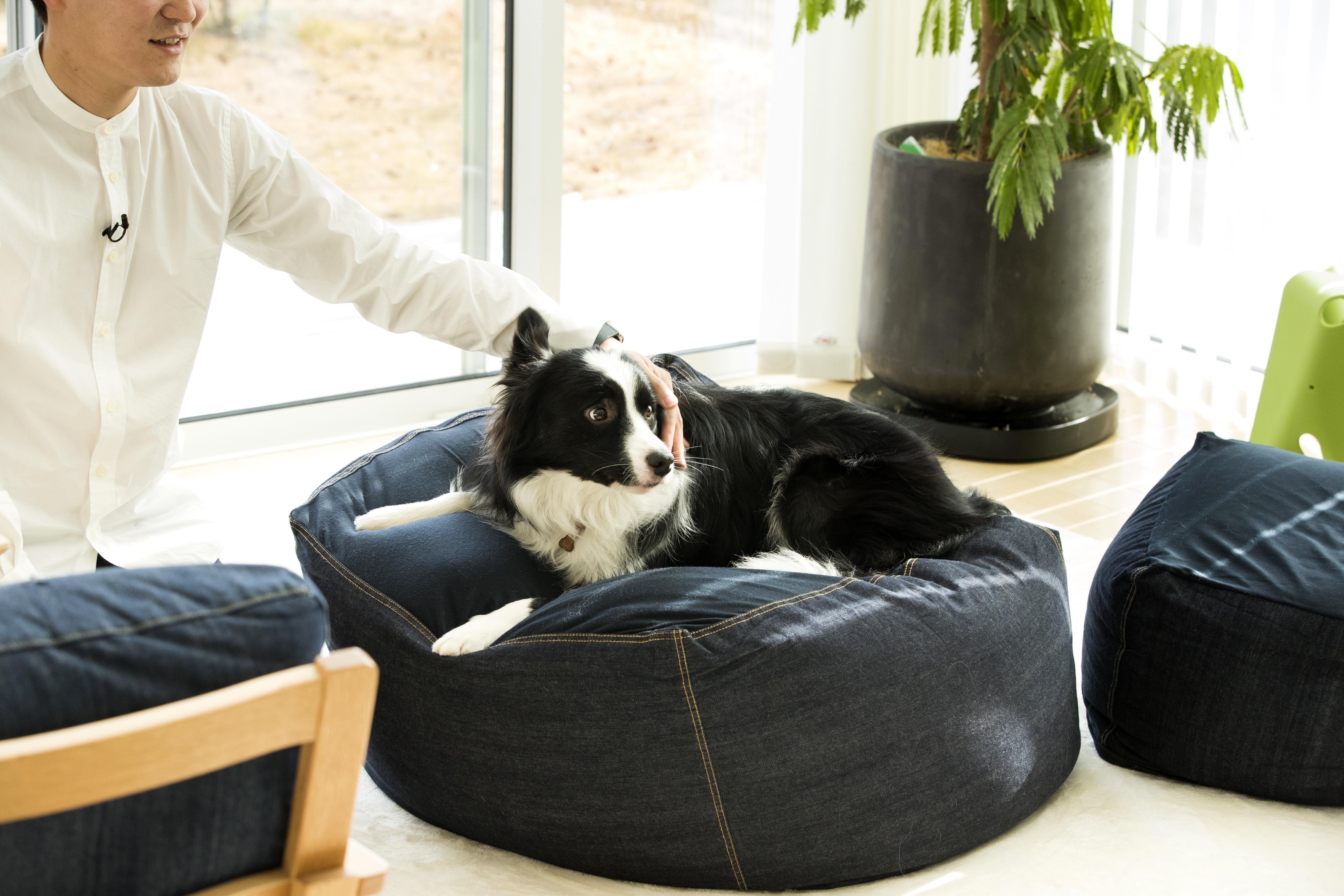 マメくん:ビーズクッションのソファの上
