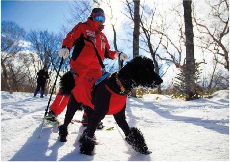 愛犬が元気になる♥ Winter Tripに出かけてみませんか?その3