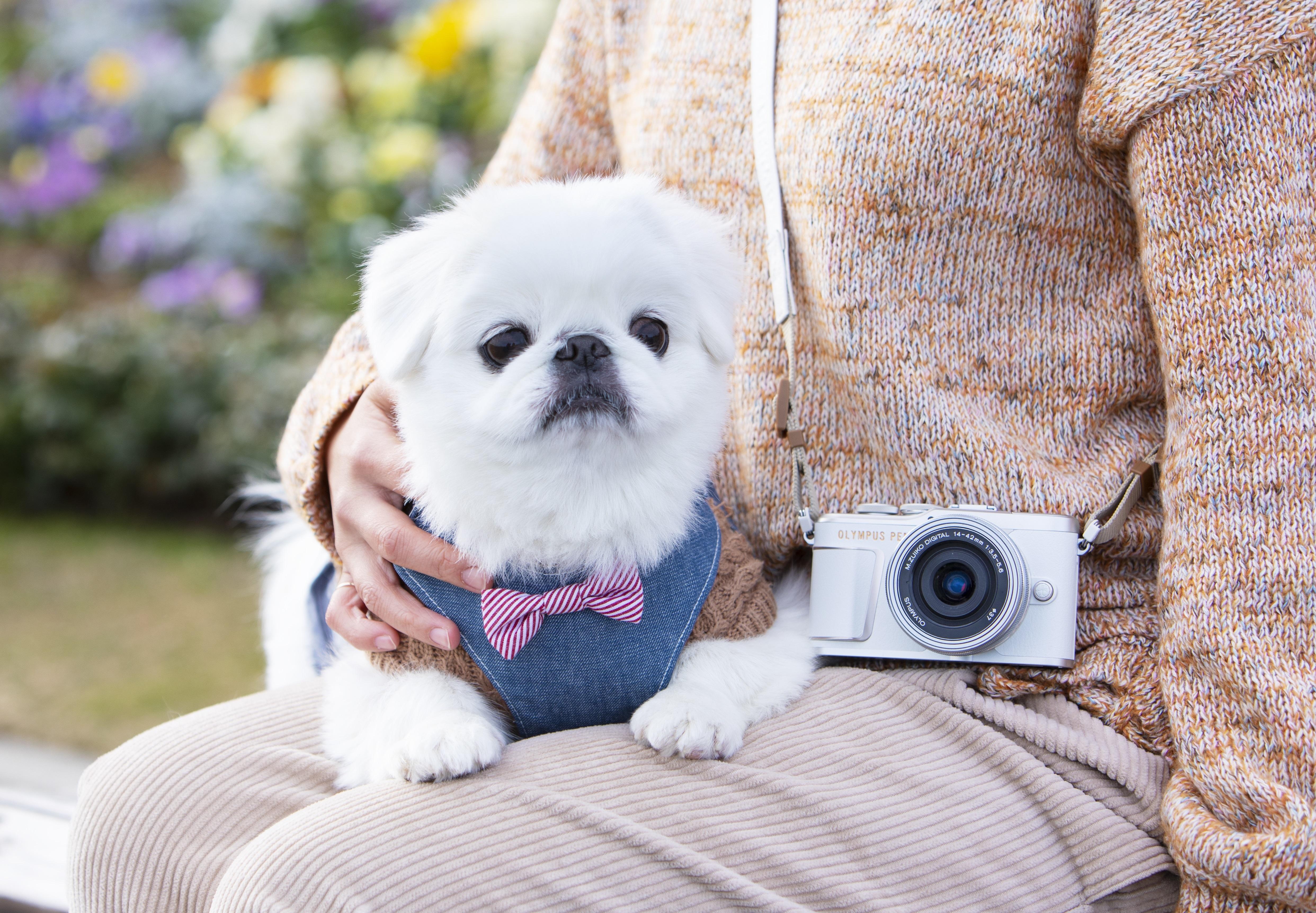 話題のミラーレス一眼カメラとともに、横浜の人気ドッグフレンドリースポットへおでかけ!【前編】