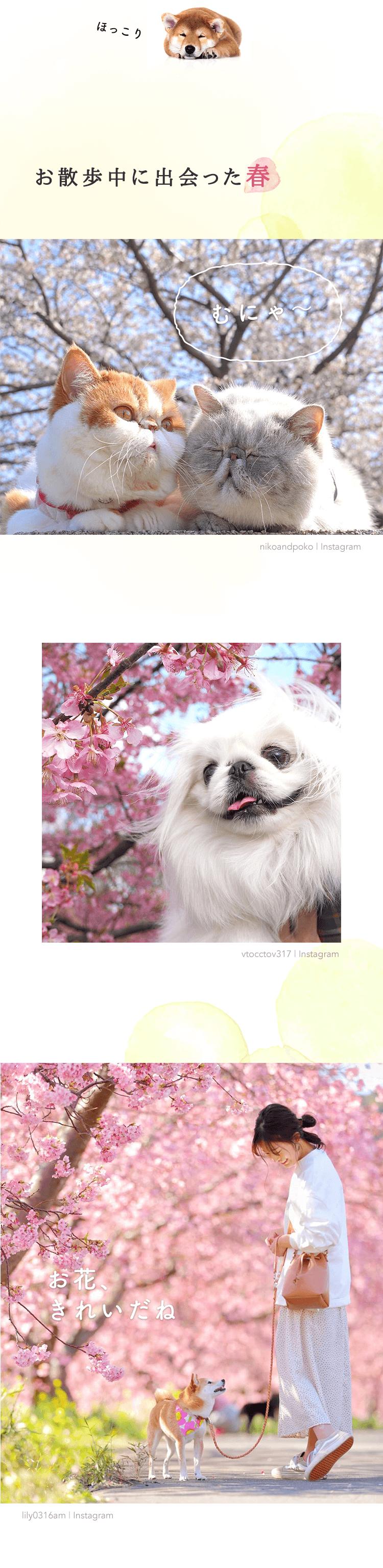 お散歩中に出会った春。