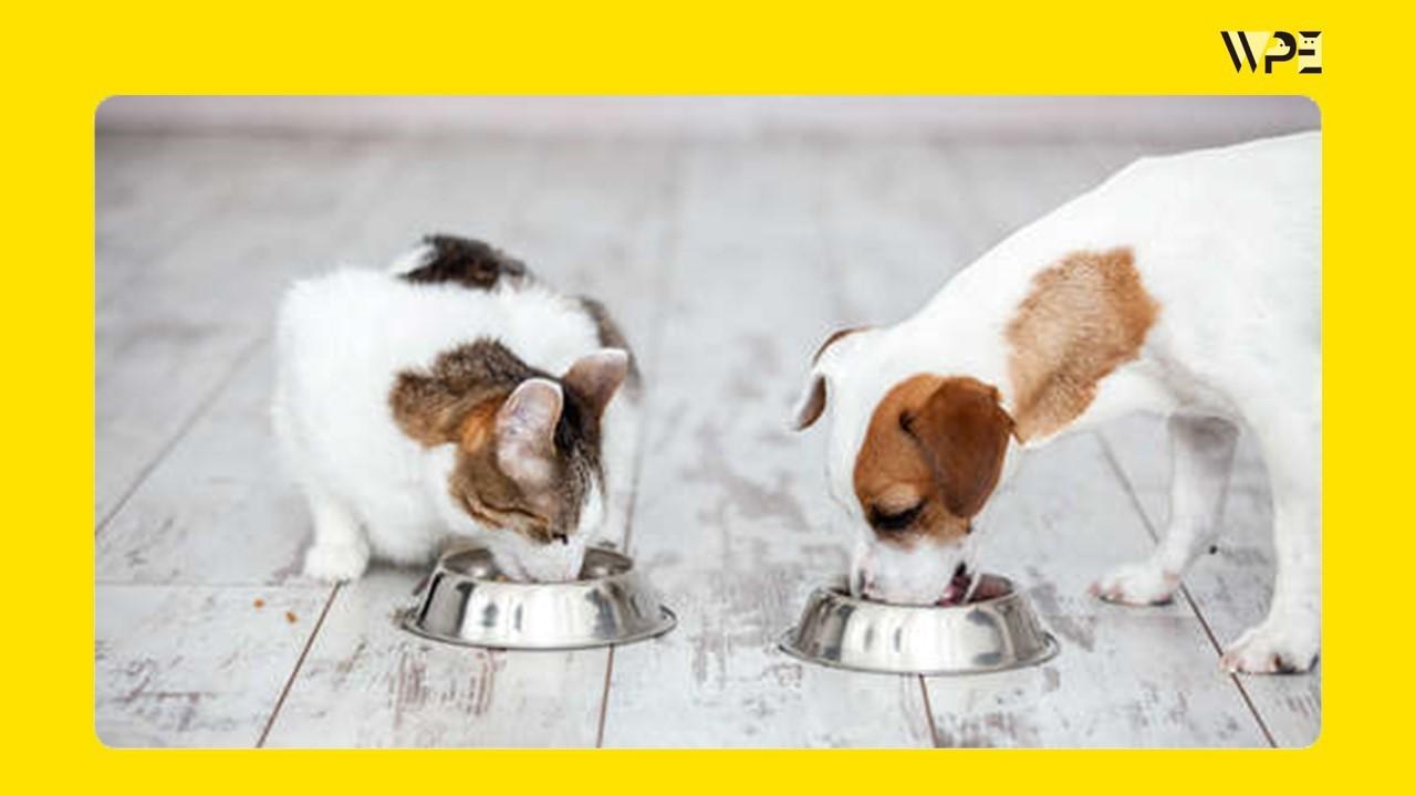 食を通じてペットの健康を考える