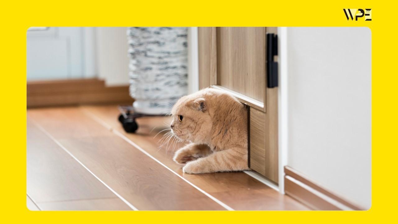 ペットリハウス実例①猫編